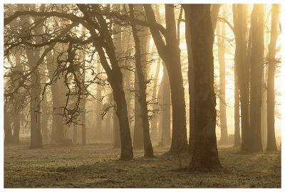 Woodland Sweep-Dennis Frates-Art Print