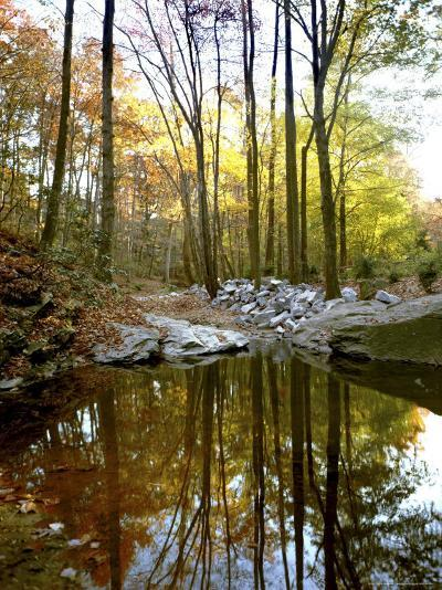 Woodland View at Long Branch Nature Center-Rex Stucky-Photographic Print