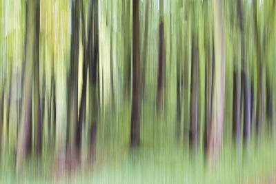 Woodland Whirl-Lee Frost-Giclee Print