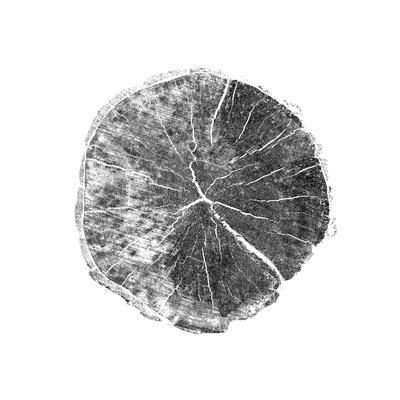 https://imgc.artprintimages.com/img/print/woodland-years-i-with-silver-foil_u-l-q1b3mwt0.jpg?p=0
