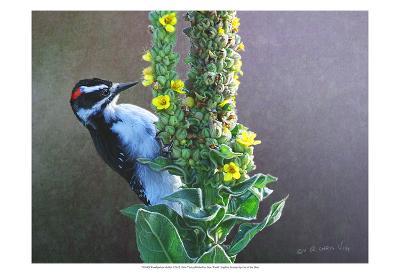Woodpecker Mullen-Chris Vest-Art Print