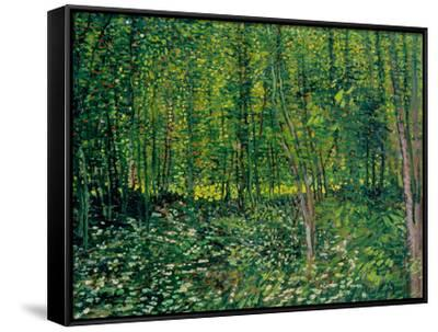 Woods and Undergrowth, c.1887-Vincent van Gogh-Framed Canvas Print