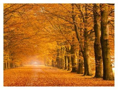 https://imgc.artprintimages.com/img/print/woods-in-autumn_u-l-f8v98s0.jpg?p=0