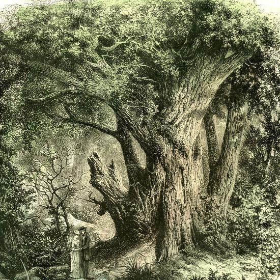 Woods Uk 19th Century--Giclee Print