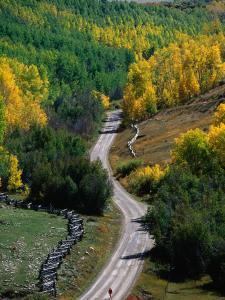 Road Leading Through Autumn Foliage in San Juan Mountains Near Telluride, Telluride, USA by Woods Wheatcroft