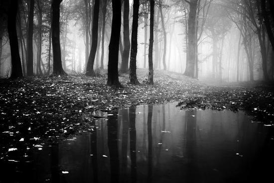 Woods-PhotoINC-Photographic Print