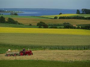 Tractor in Field at Harvest Time, East of Faborg, Funen Island, Denmark, Scandinavia, Europe by Woolfitt Adam