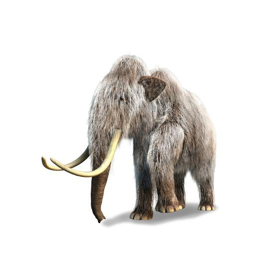 Woolly Mammoth, White Background--Art Print