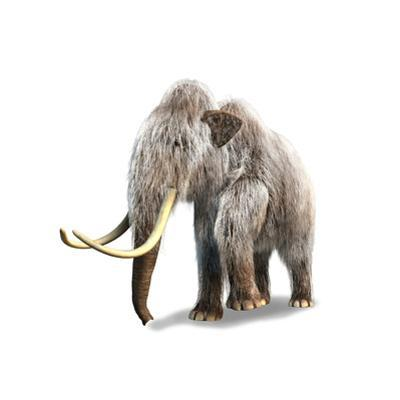 Woolly Mammoth, White Background