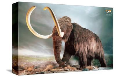 Woolly Mammoth--Stretched Canvas Print