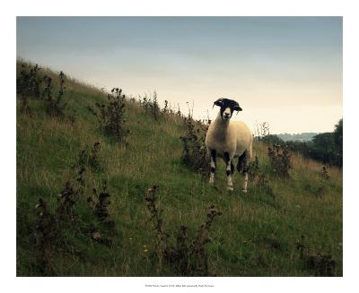 Wooly Friends II-Lillian Bell-Giclee Print