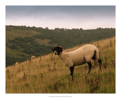 Wooly Friends III-Lillian Bell-Giclee Print