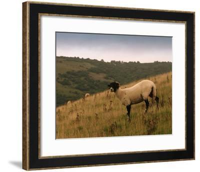 Wooly Friends III-Lillian Bell-Framed Giclee Print
