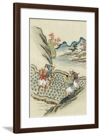 Workers Cultivating Rice in a Paddy Field, 19th Century--Framed Giclee Print