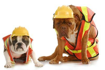 Working Dogs - English Bulldog And Dogue De Bordeaux Dressed Like Very Tire Construction Workers-Willee Cole-Photographic Print