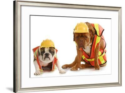 Working Dogs - English Bulldog And Dogue De Bordeaux Dressed Like Very Tire Construction Workers-Willee Cole-Framed Photographic Print