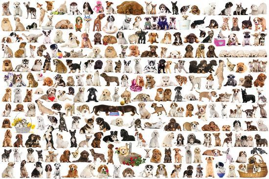 world-of-dogs