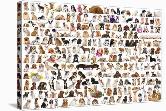 World of Dogs--Stretched Canvas Print