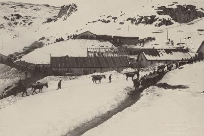 World War I: Donkeys and Mules Carrying Food and Ammunition in a Military Unit--Photographic Print