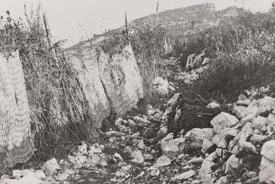 World War I: Path Hidden by Screens on the Mountains of Veneto--Photographic Print