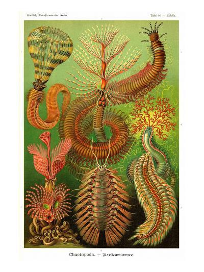 Worms-Ernst Haeckel-Art Print