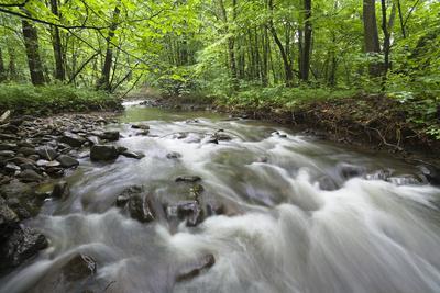 Okna River, Morske Oko Reserve, Vihorlat Mountains, East Slovakia, Europe, June 2008