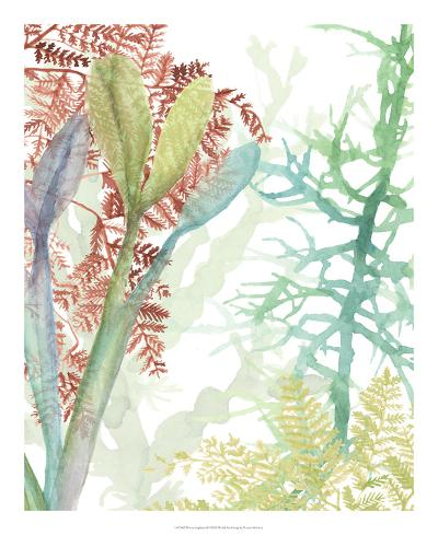 Woven Seaplants II-Naomi McCavitt-Giclee Print