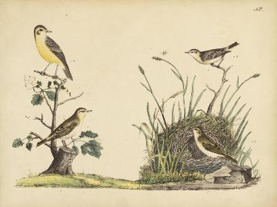 Wrens, Warblers and Nests II-Friedrich Strack-Art Print