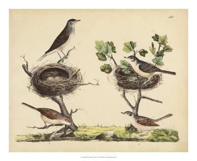 Wrens, Warblers & Nests I-Friedrich Strack-Giclee Print