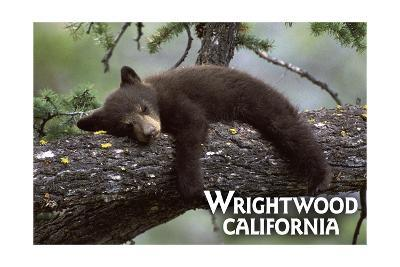 Wrightwood, California - Black Bear in Tree-Lantern Press-Art Print