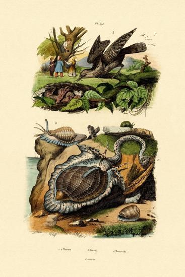 Wryneck, 1833-39--Giclee Print