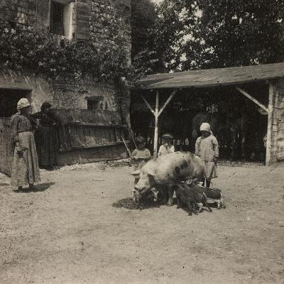 WWI: Inhabitants of Soleschiano with a Sow--Photographic Print