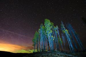 Illuminated Trees in Front of the Starry Night Sky by www.preservedlight.com