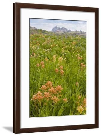 Wyoming, Grand Teton National Park, Wildflowers Along the Death Canyon Shelf-Elizabeth Boehm-Framed Photographic Print