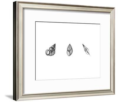 X-Ray Landsnail Triptych-Bert Myers-Framed Art Print