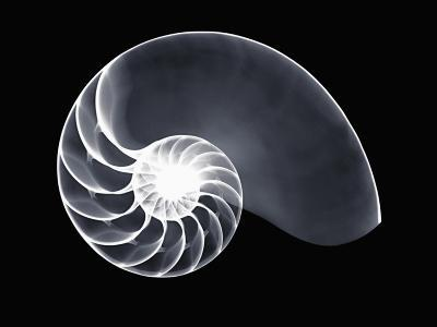 X-Ray of a Chambered Nautilus Shell-George Taylor-Photographic Print