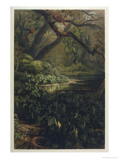 Xanthosoma and Other Exotic Flora and Birds in the Brazilian Jungle-J^ Selleny-Premium Giclee Print