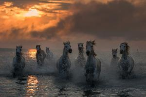 Camargue on Fire by Xavier Ortega