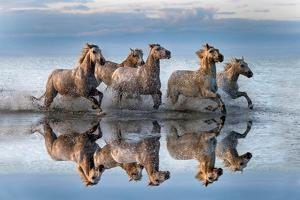 Horses and reflection by Xavier Ortega