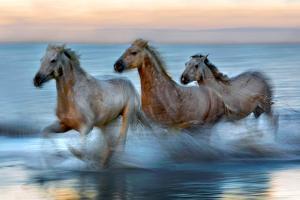Slow Motion Horses by Xavier Ortega