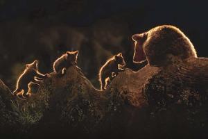 Triplets by Xavier Ortega