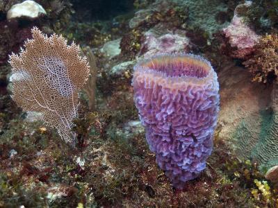 Xcalac Marine Reserve, Mahahual Peninsula, Quintana Roo, South Yucatan Peninsula, Mexico-Pete Oxford-Photographic Print