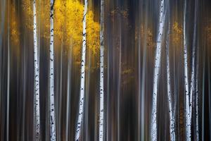 Curtain of Fall by Xiaohua Hu