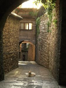 Cat Resting in the Middle of a Cobblestone Street in Gubbio, Italy by xPacifica