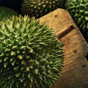 Durian Fruit - Popular in South East Asia by xPacifica