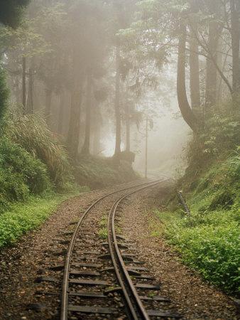 Train Tracks Found on the Forest Floor Bend around a Corner