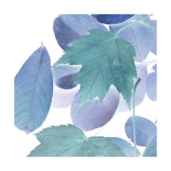 Xray Leaves III-Vision Studio-Art Print