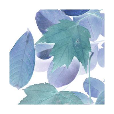 https://imgc.artprintimages.com/img/print/xray-leaves-iii_u-l-q19bip40.jpg?p=0