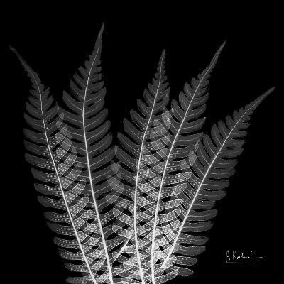 Xray Tree Fern-Albert Koetsier-Premium Giclee Print