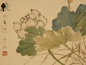 Lotus by Xu Gu